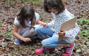 Winter Break Camps: Science of Leaves